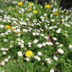Blumenwiese Träume