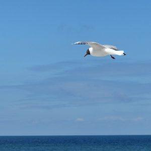 """""""Frei wie ein Vogel"""" - ein Symbol der Freiheit"""